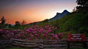 The Remarkable Rhododendron Ramble @ Grandfather Mountain | Linville | North Carolina | United States