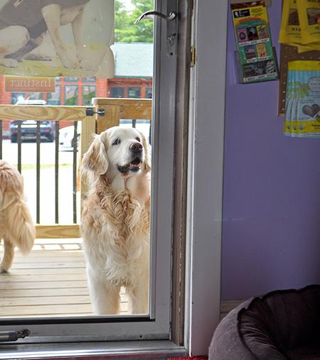 Fun pet store in Banner Elk North Carolina